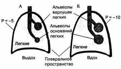 Перфузия легких