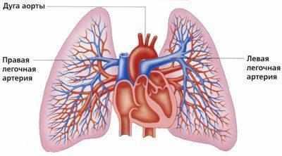 Легочные артерии