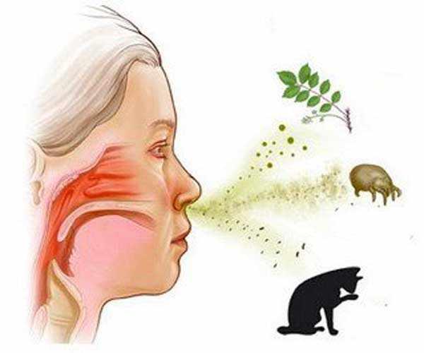 Человек и аллергены